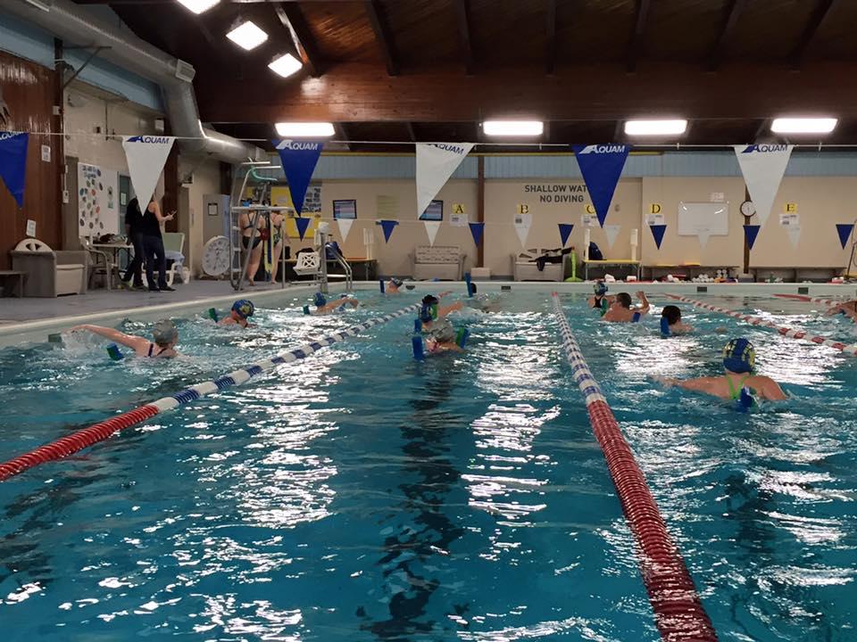 gallery acton aqua ducks swim club